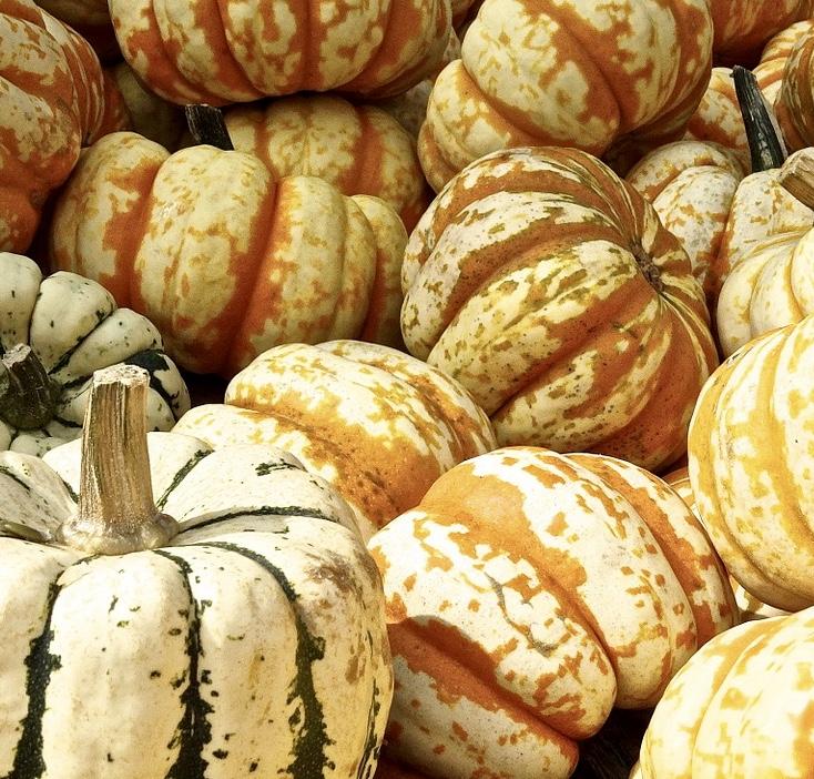 pumpkin-441203_960_720-1